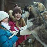 kuschelwolf_1