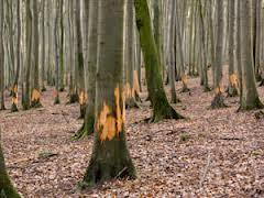 Waldschaden_1