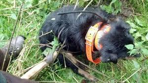 Terrier mit Mistgabel